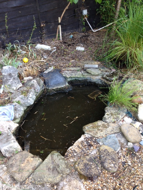 The original pond (without the plants its not that small surely?)